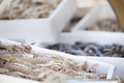 Heuschreckenkrebse © Capuano