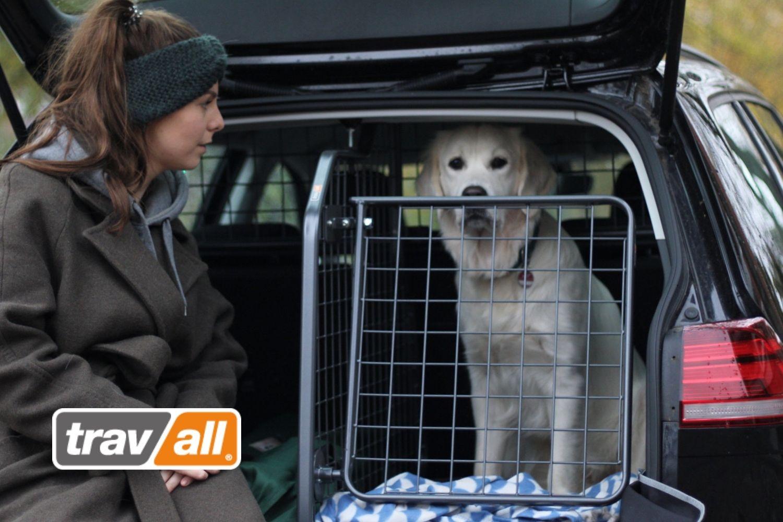 Hunde werden mit Travall Hundegittern, Laderaumteilern und Heckgittern effektiv im Auto gesichert. © Travall