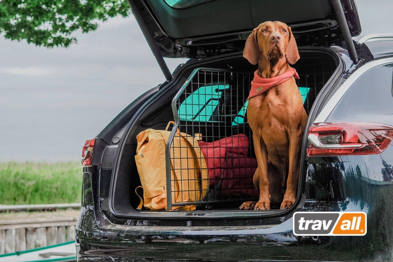 Hunde werden mit Travall effektiv im Fahrzeug gesichert. © Travall