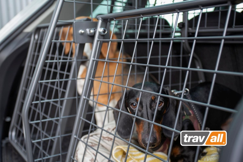Zwei oder mehr Hunde werden mit Travall Hundegittern im Auto gesichert. © Travall